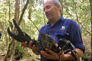 Photos: Giant Crayfish from the Rapid River in the Tarkine forest in Tassie, Sacred trees in Ararat and Mowbray Park.